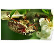 May-Bug Poster