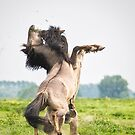 Horses don't usually fight over grass by Henri Ton