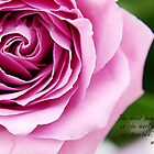 Little Reminders-Rose by Brooke Martin Photography