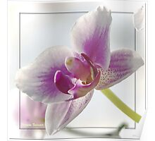 ~ Orchid ~ Poster