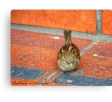 Another Tourist (House Sparrow) Canvas Print