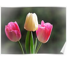 Tulips of Pink & White Poster