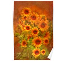 Basking in Sunflowers - Private Garden, Kanmantoo, SA Poster