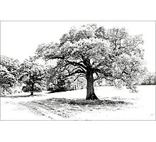 Rydon Fields Photographic Print