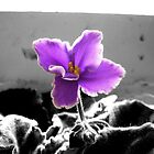 African Violet by Peter Simpson