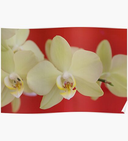 My Beautiful Orchids! Poster