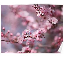 Dreamy Plum Blossoms Poster