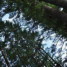 Pine Alley by Sara Bawtinheimer