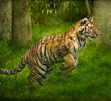 Tiger leap by bettywiley