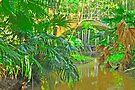 Ferny Pond by Margaret Stevens