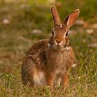 Regal Rabbit by PhotoKismet