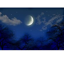 Night in the Trees Photographic Print
