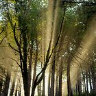 Sun's Ray's, Limekiln, CA by SolanoPhoto