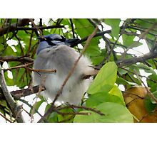 Half bird, half cat Photographic Print