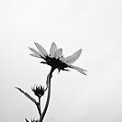 Skybound by Carol Ritchie