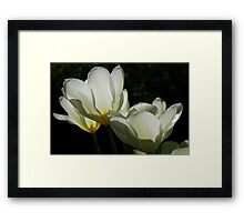 Backlit.... Framed Print