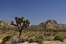 Joshua Tree National Park by Larry Costales
