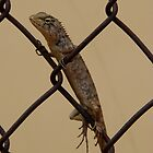 Lizard on a fence by Tom Shapland
