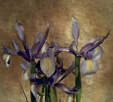 Iris's by Catherine Hamilton-Veal  ©