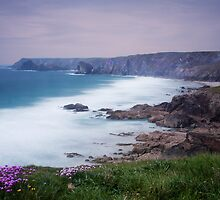 Sea Thrift at Pentreath by David-J