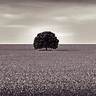I stand alone by scottimages
