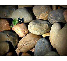 Stone Cold Photographic Print