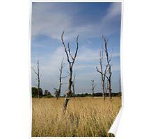 Tree Graveyard Poster