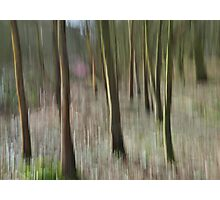 Woodland Dream Photographic Print