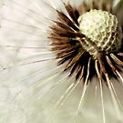 Blowball...(3) by Bob Daalder