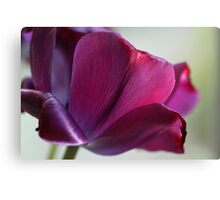 The Purple Tulip Canvas Print