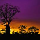 A Boab Tree at Sunrise in Derby WA. by Alwyn Simple