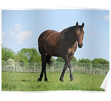 Thoroughbred Walking Poster