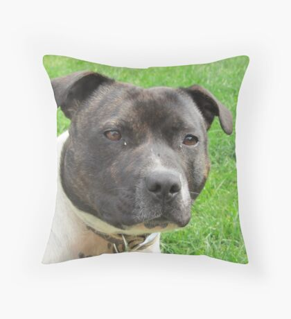 Headshot of a Staffordshire Bull Terrier Throw Pillow