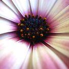 Pollen Pops by Vanessa Barklay