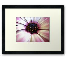 Pollen Pops Framed Print