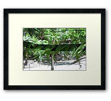 Florida  Cypress Framed Print