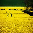 Yellow Under The Sun by lallymac