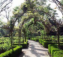 Rose Garden by ANDREW BARKE