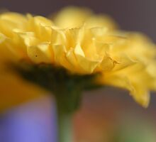 Yellow Dreams by vbk70