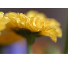 Yellow Dreams Photographic Print