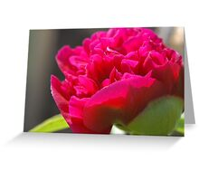 First Peony of 2011 Greeting Card