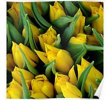 Tulips. II Poster