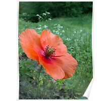 Coquelicot Rouge... pour Maman! Poster