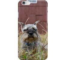 Miniature Schnauzer in Front of Old Red Barn iPhone Case/Skin