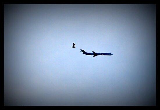 It's A Bird It's A Plane........... by AngieBanta