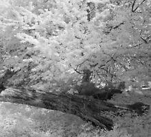 Fallen Tree - Infrared by Ann Garrett