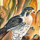 Naturehouse Falcon by ddonovan
