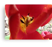 Red and Yellow Canvas Print