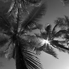 Eleuthera Island, Bahamas by Kent Nickell