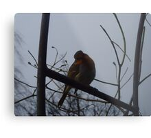 Robin - keswick, lake district Metal Print